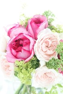 flower_online01